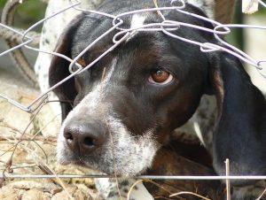 dog_animal_abused