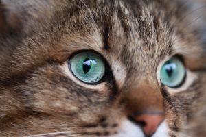 cat-3217406_1920