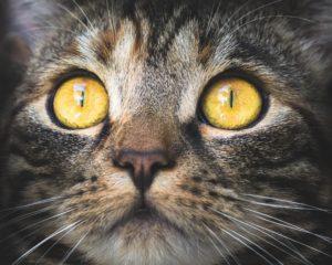 cat-3374422_19rr